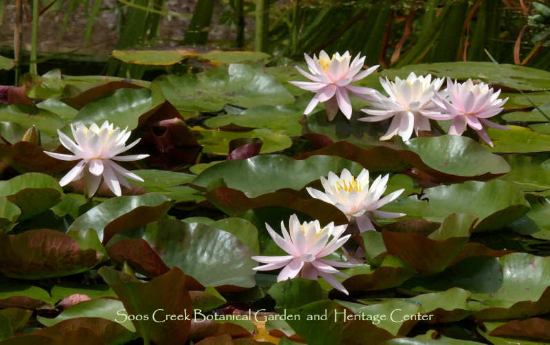 Soos Creek Botanical Garden and Heritage Center from FB.jpg