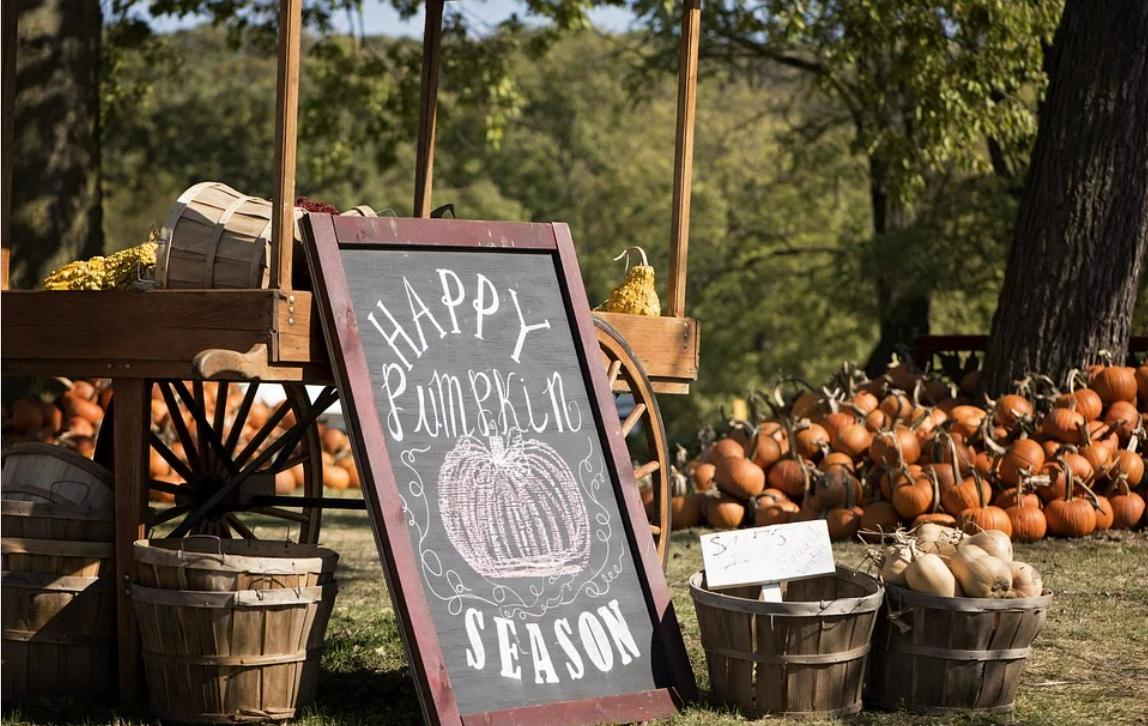 pumpkin patch fall.png
