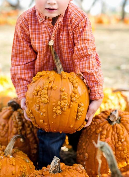 Harvest Market & Festival