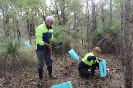 Bushcare activities with Byford Enviro-Link