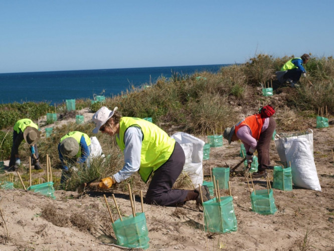 Coastcare activities with Stirling Natural Environment Coastcare (SNEC)