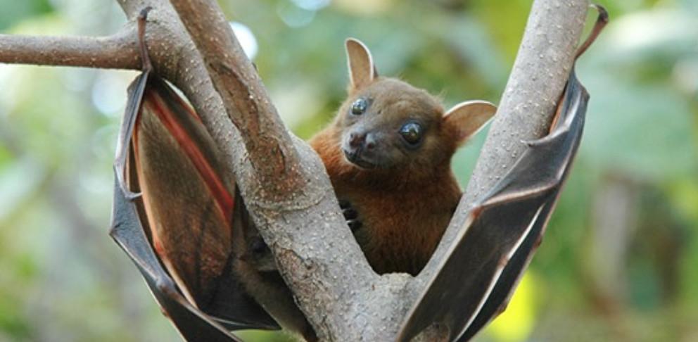 Fred Elser First Sunday Science at the Seaside Center:  Bat Diversity & Habitat Use Post-White-Nose Syndrome