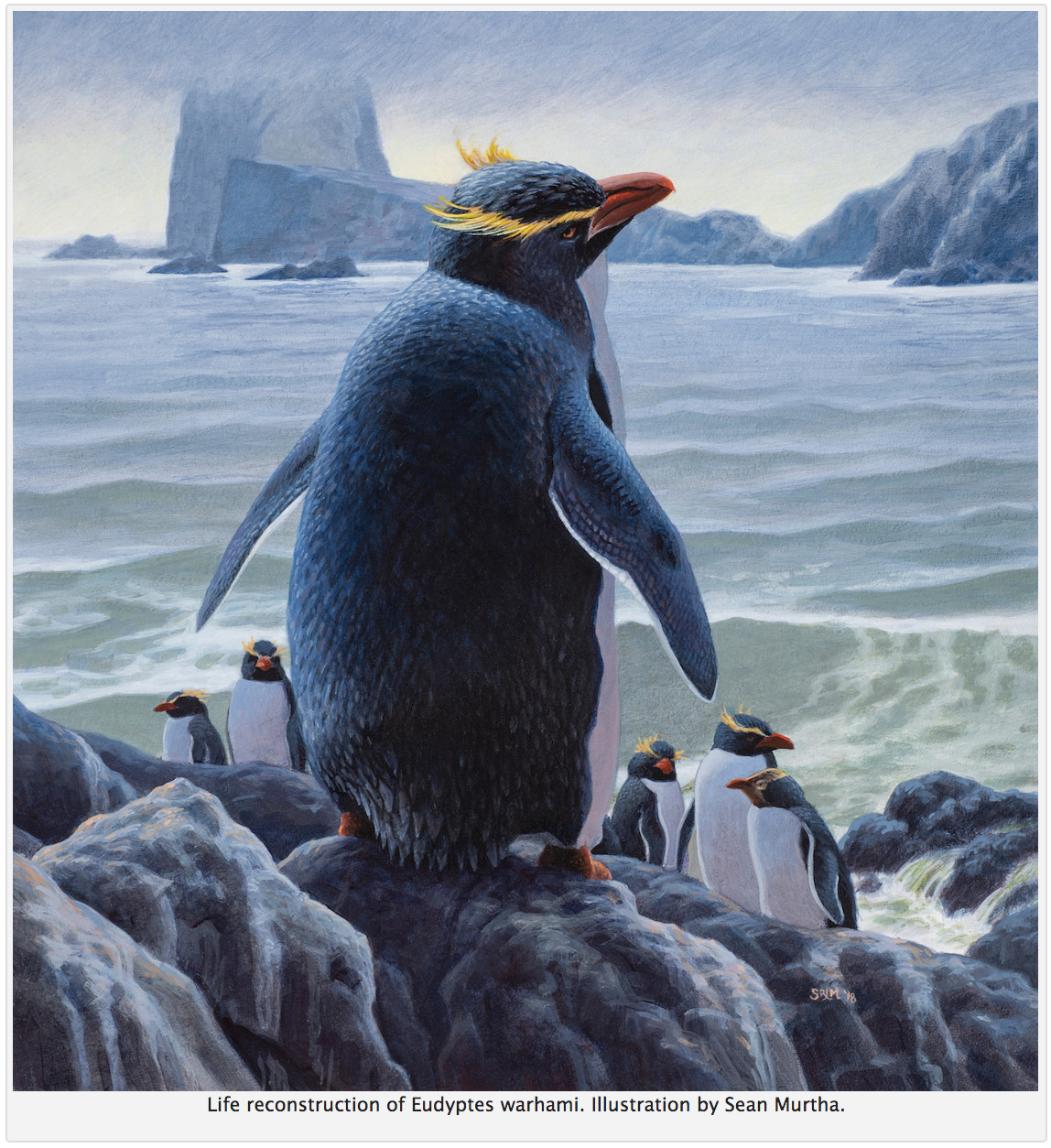 Fred Elser First Sunday Science: March of the Fossil Penguins