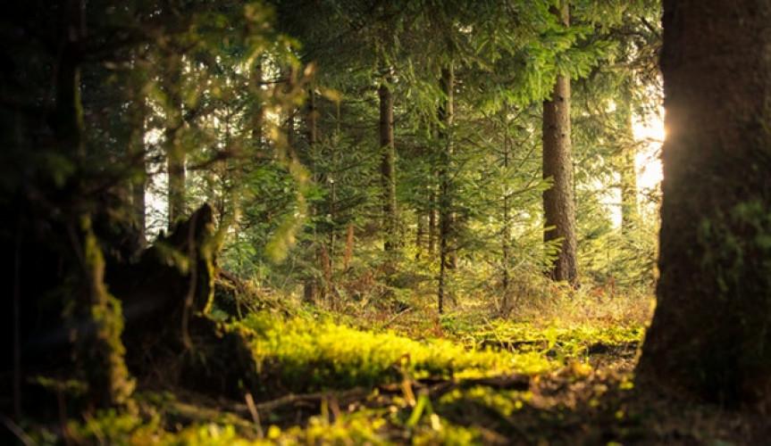 Chasse au trésor nature et familiale dans le bois