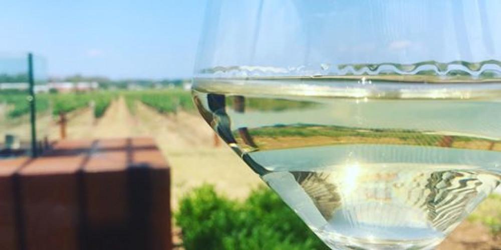 Chardonnay Tasting & Class