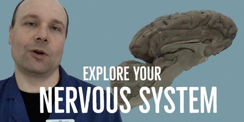 Explore Your Nervous System - Virtual Spring Break