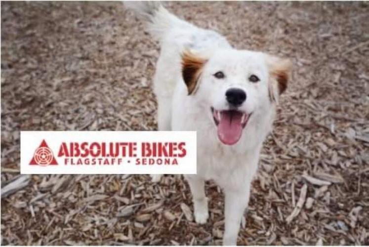 Absolute Bikes Dog Adoption Event