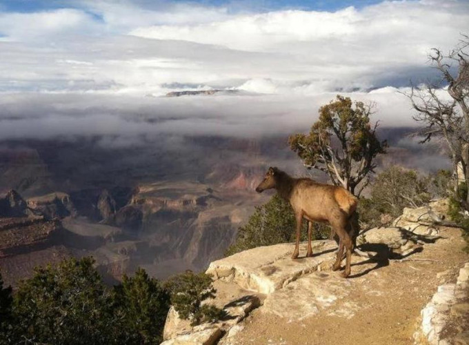 Grand Canyon Life in Changing Climate