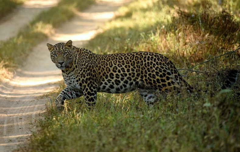 A Big Tour for The Endangered Wildlife of India (18 Days; # 670 - B)