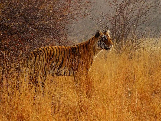 India's Most Amazing Tiger Reserves (10 Days; # 749 - B)
