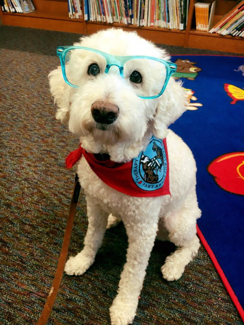 Paws for Reading at GLADL
