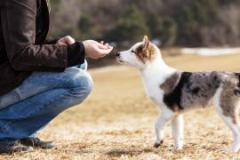 Man training puppy_puof.jpeg
