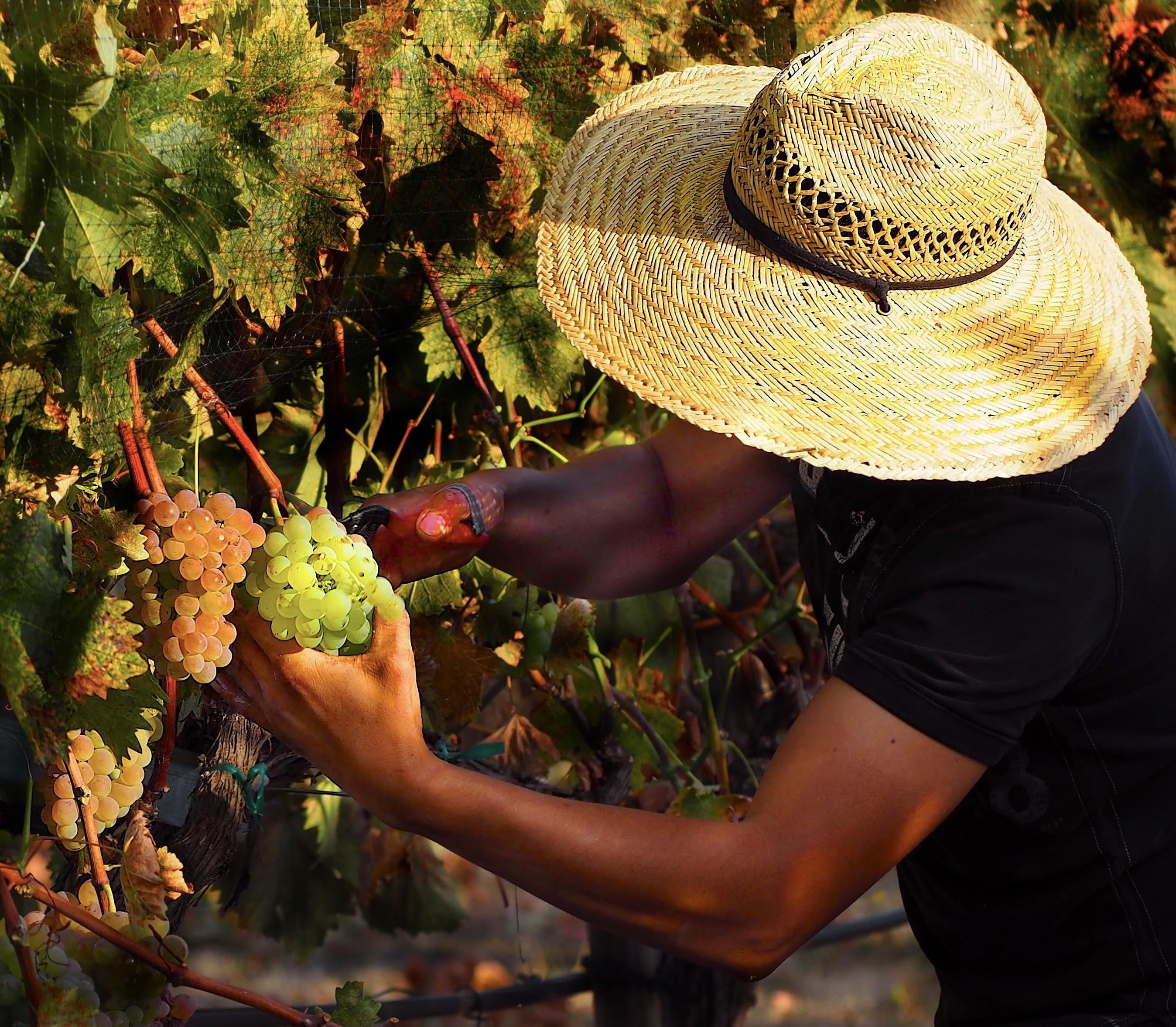 Biodynamic Wines 101 with Ashland Wine Cellar