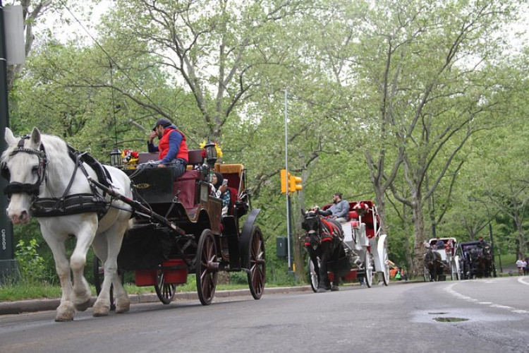 Small Group Horse and Carriage Ride through Central Park (Up to 4 People)