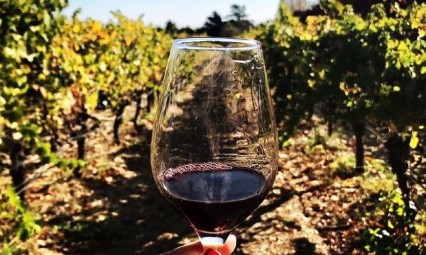 Napa and Sonoma Wine Country - Full Day Tour from San Francisco