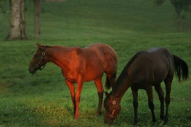 Thoroughbred Horse Farm Tour