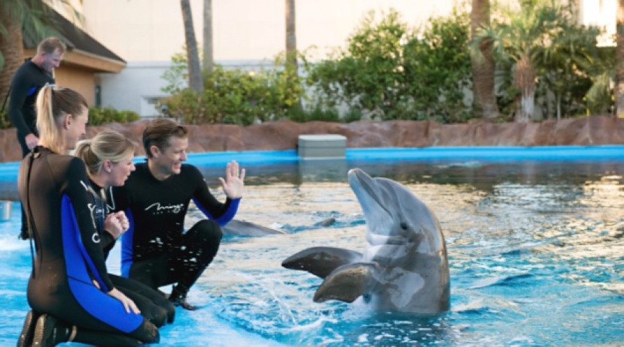 Siegfried & Roy's Secret Garden and Dolphin Habitat | The wildest part of Las Vegas isn't necessarily the nightlife.