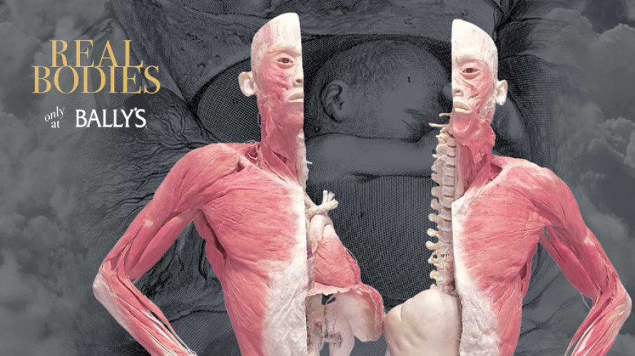 Real Bodies - Bodies Exhibition