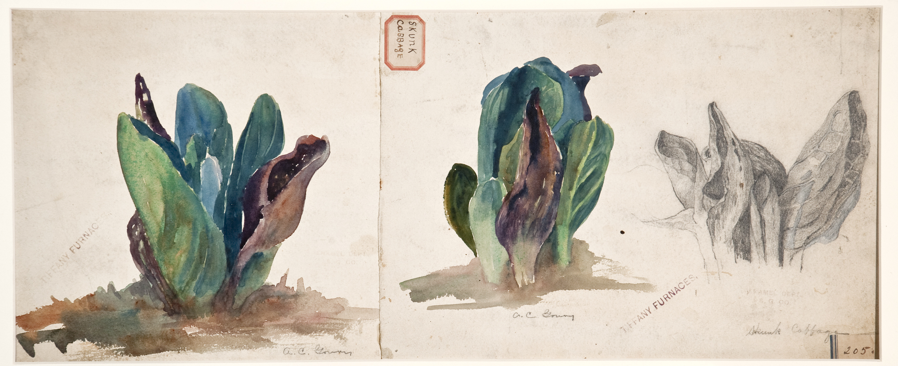 """Exhibition Opening: Watercolors from Louis Comfort Tiffany's """"Little Arcadia"""""""
