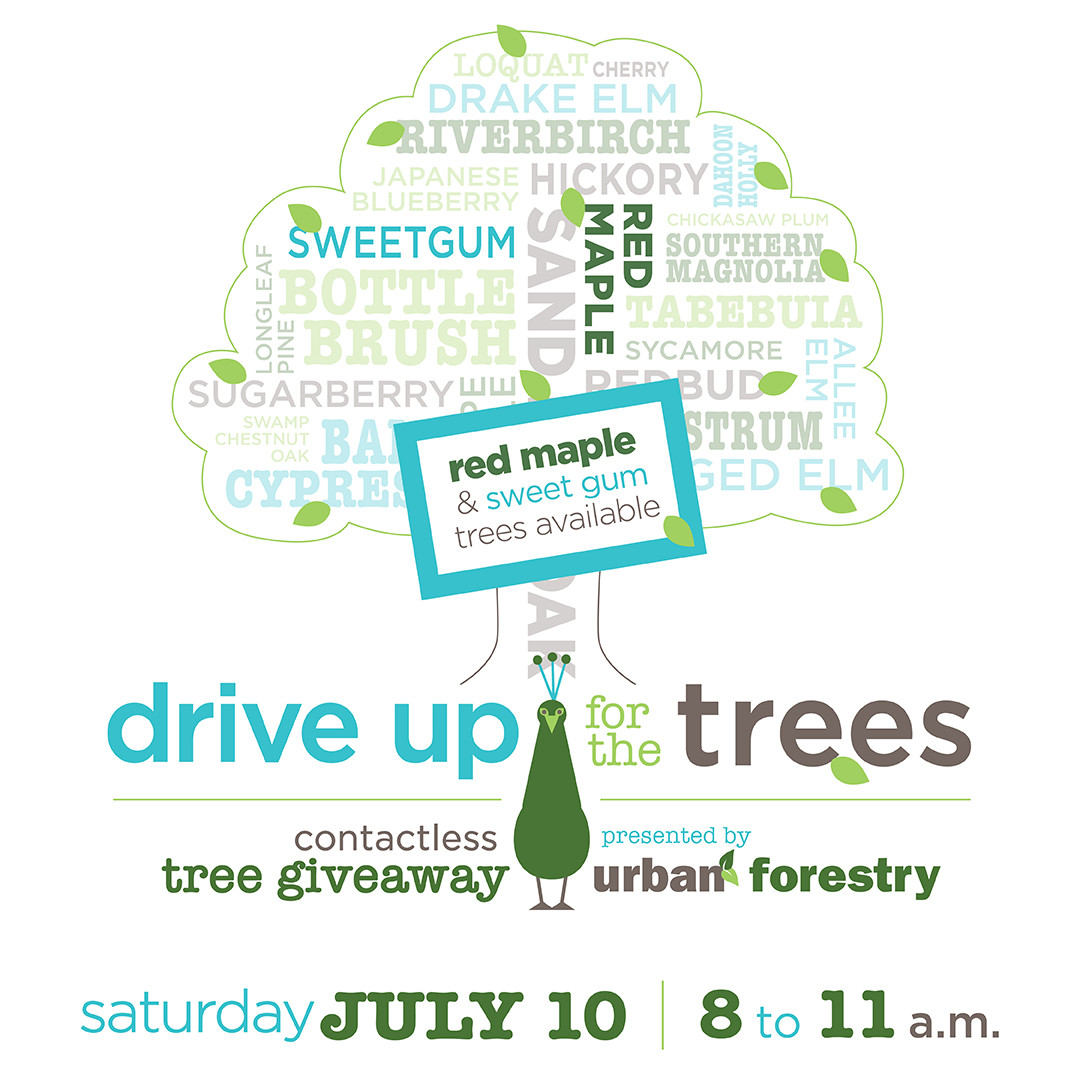 Flyer for event with peacock tree