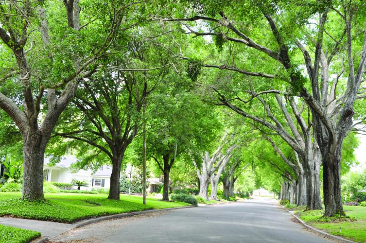 TreelinedStreet.jpg