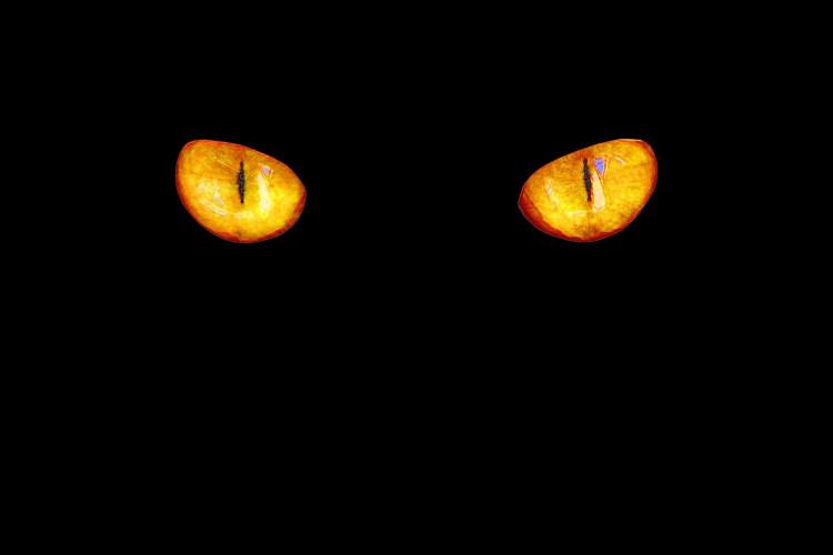 cat-eyes-4789730_1920.jpg