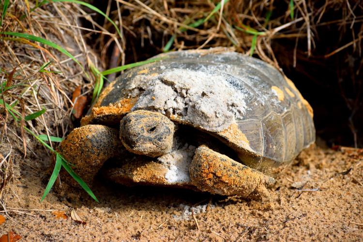 gopher-turtle-6248563_1920.jpg