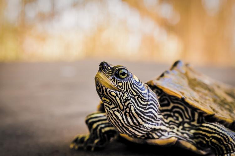 turtle-4496678_1920_7g6a.jpg
