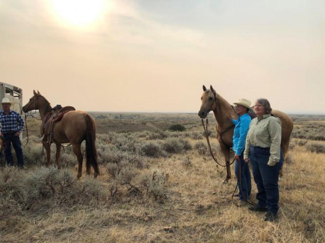 Sunrise-cattle-drive-Loving-U-Ranch-Montana-Janet-Veseth.md.jpg